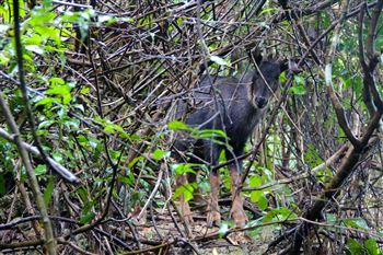 Trekking 1 day in Cat Ba National park